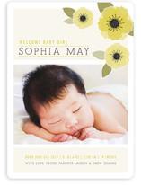 New Born Poppy