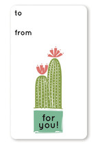 Cacti Collection by Rae Kaiser