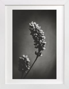 Wild Grass Study Domino Non-custom Art Print