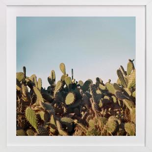 Cactus in a sunset Domino Non-custom Art Print