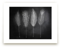 Chalk Feathers by Lindsay Hanson