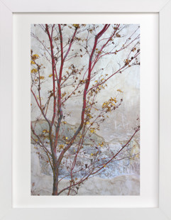 Courtyard Maple Art Print