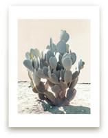 Blue Cactus by Wilder California