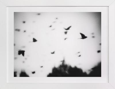 Blackbirds Art Print