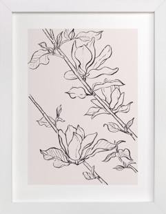 magnolia study Art Print