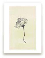 Botanical Study I by Kate Wong