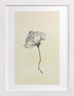 Botanical Study I Art Print