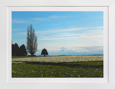 Quiet Field Art Print