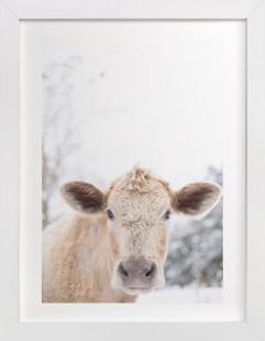 moo cow Art Print