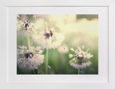 Dandelion Dreams Art Print