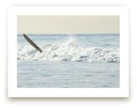 Wipeout, Venice Beach by Annie Seaton