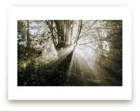 Foggy Treehouse