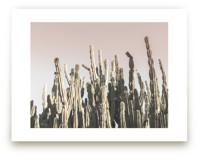 Summer Cactus by Wilder California