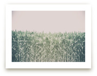 Corn Field by Alexis Arnold