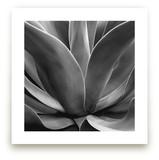 California Succulent by LeeAnn Dougherty