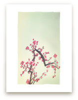 Peach Blossoms by Shasta Knight