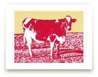 Petaluma Cow