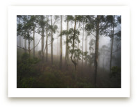 Trees in the Mist by Benno and Noosa