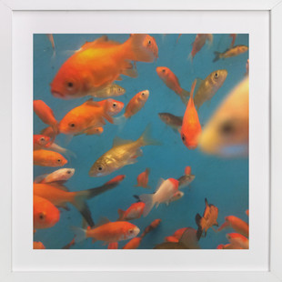 Fish Tank Photography 1 Art Print