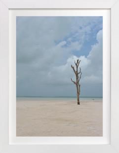 A tree stands alone. Art Print