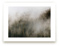 Pacific North Fog by Pockets of Film