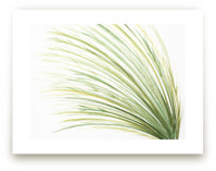 Tall Grass Watercolor by Loree Mayer