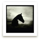 Burren Horse