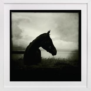 Burren Horse Art Print