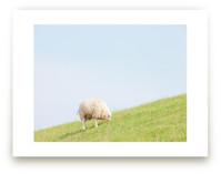 Sheep at Lunch by Alexandra Feo