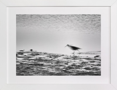 Shorebird Art Print