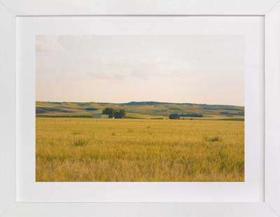 Golden Fields Art Print