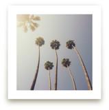 Sunny Palm Trees