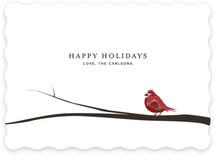 Cardinal On Branch