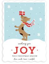 Joyful Pup