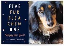 Canine Countdown