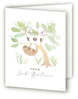 Baby sloth by Jennifer Wick