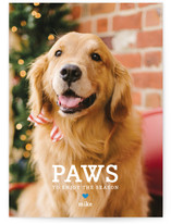 Paws Holiday Photo Cards