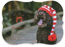 Doggy Joy
