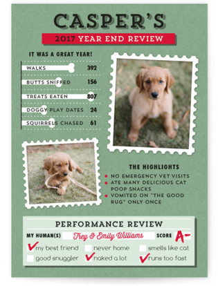 Dog's Year in Review Holiday Photo Cards