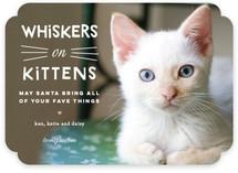 Whiskers on Kittens