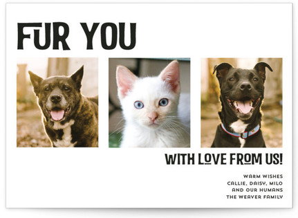 Fur You Holiday Photo Cards