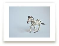 Oh, Zebra by Kinga Subject