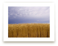 Tall Wheat and Subtle C... by Kathy Van Torne