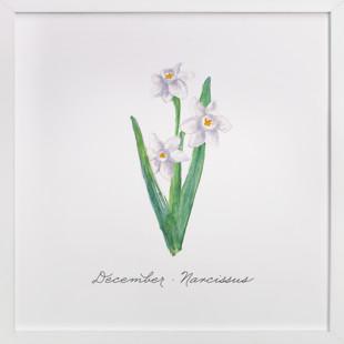December Narcissus  Art Print