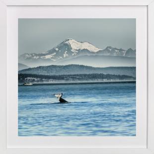 Whale of a Tale  Art Print