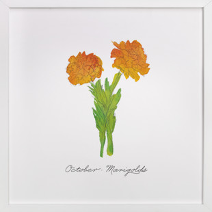 October Marigold  Art Print