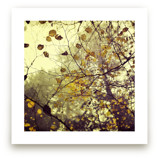 Canopy Wall Art Prints