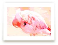 Nestled Flamingo
