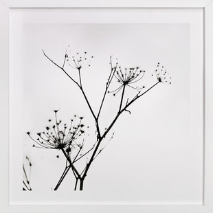 Graphic Elements of Nature  Art Print