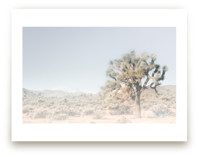 Joshua Tree #1